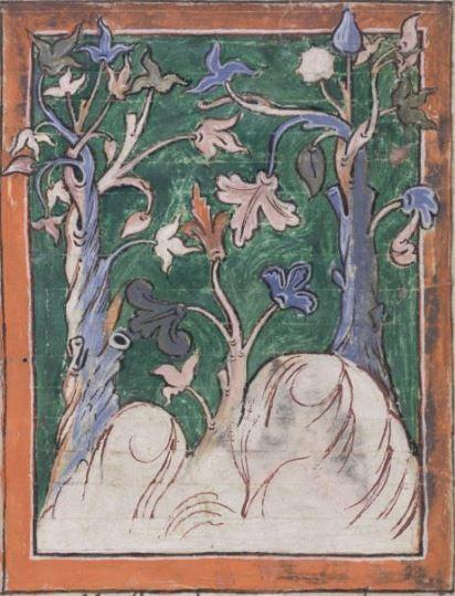 TibBv1.83r Balsam trees