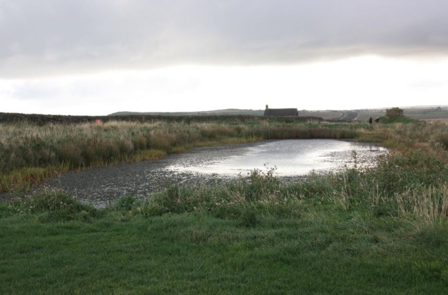 Whitby pond